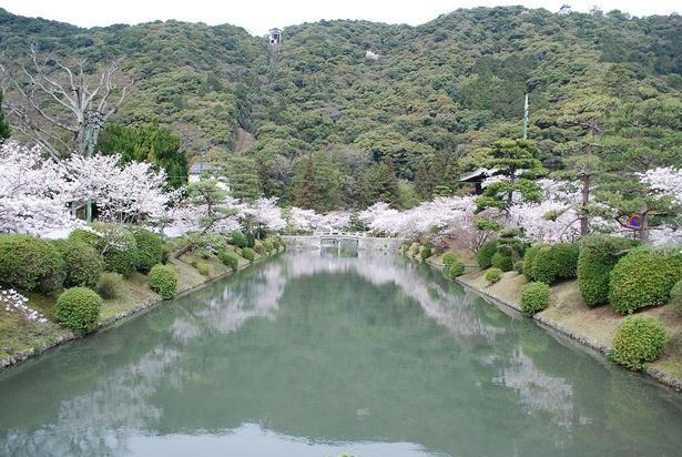吉香公園のお堀と桜