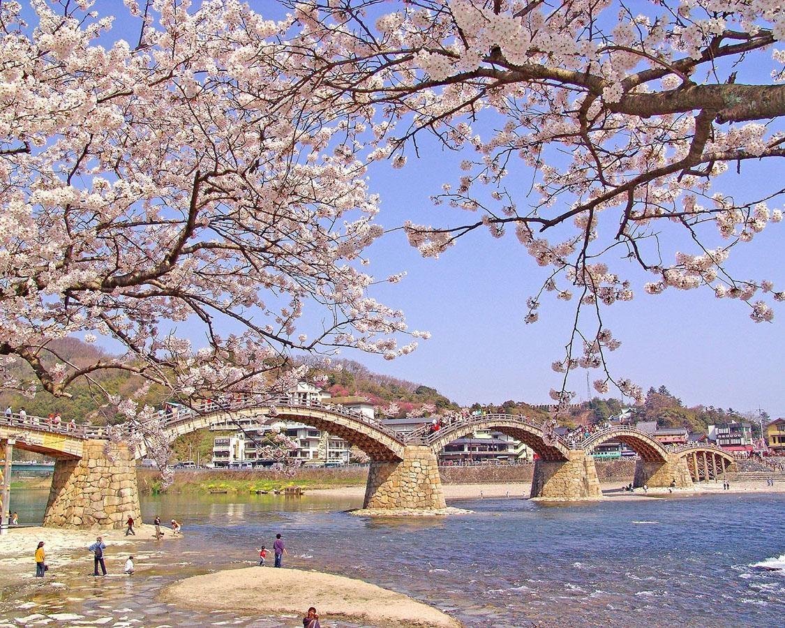 名橋と桜の景観は圧巻!山口県岩国市の錦帯橋周辺の桜はいつが見頃?