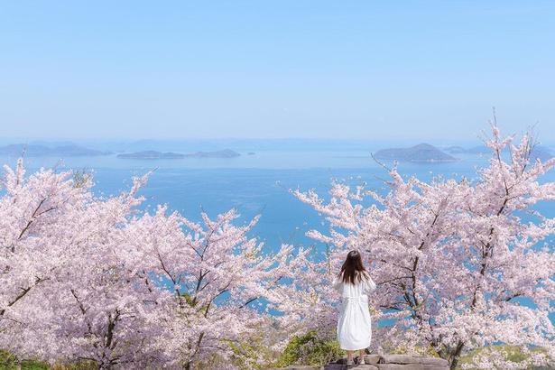 桜を保全するための大規模剪定により、写真の景観とは異なる