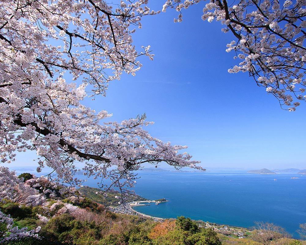瀬戸内海の多島美と桜が同時に楽しめる、香川県三豊市の紫雲出山の桜はいつが見頃?