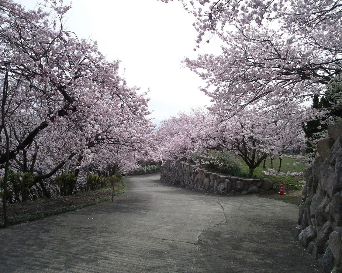 8000本超えの桜は圧巻、徳島県美馬市の八百萬神之御殿の桜はいつが見頃?