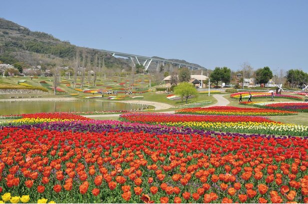 淡路島国営明石海峡公園で行われる「春のカーニバル」。大地の虹などの大型花壇には、チューリップをはじめ、ネモフィラやユリなども咲き誇る