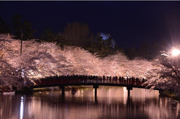 公園中の桜が照らされる姿は息をのむ美しさ