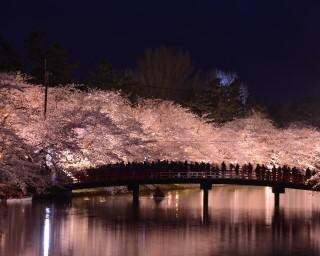 日本3大夜桜に数えられる絶景!青森県弘前市で「2021年弘前さくらまつり」が開催