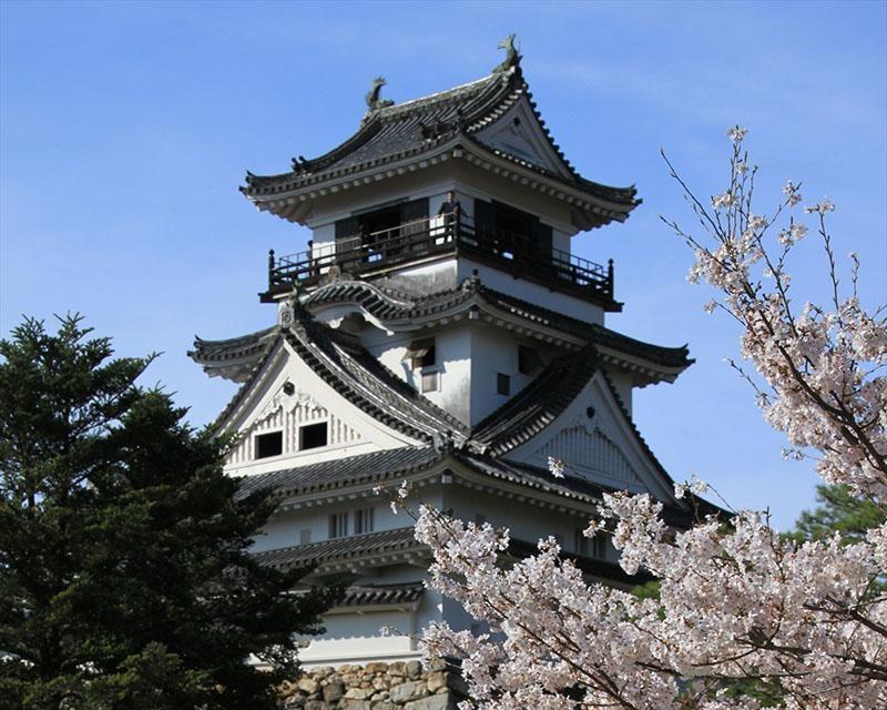 日本100名城と桜のコラボレーション!高知県高知市の高知公園の桜はいつが見頃?