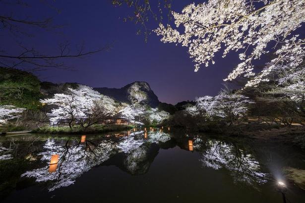 【写真】ライトアップされた桜が池の水面に映り込む幻想的な景色が広がる