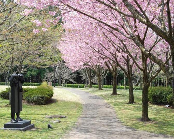 200種2000本の桜が咲き誇る、秋田県南秋田郡井川町の日本国花苑の桜の見頃は?