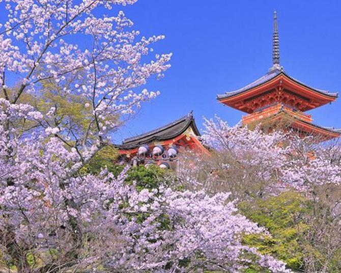 """京都の絶景""""桜スポット""""14選!春の京都を楽しみ尽くそう"""
