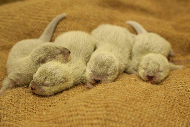 2020年4月に誕生した「コツメカワウソ」の赤ちゃん他、癒しの動物が待っている!
