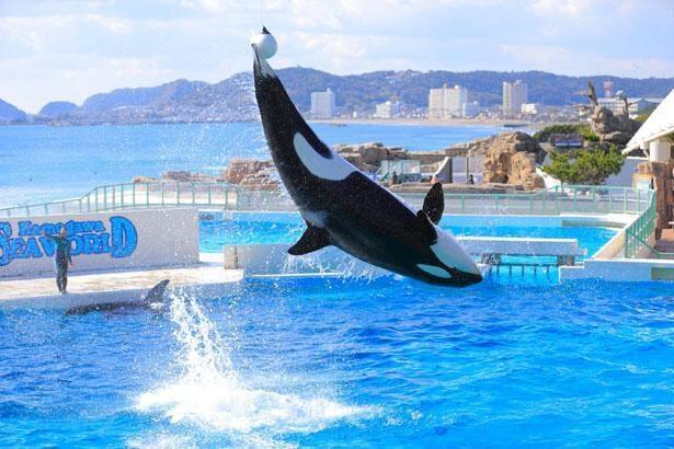 大量の水しぶきを上げながら、シャチが豪快にジャンプ!