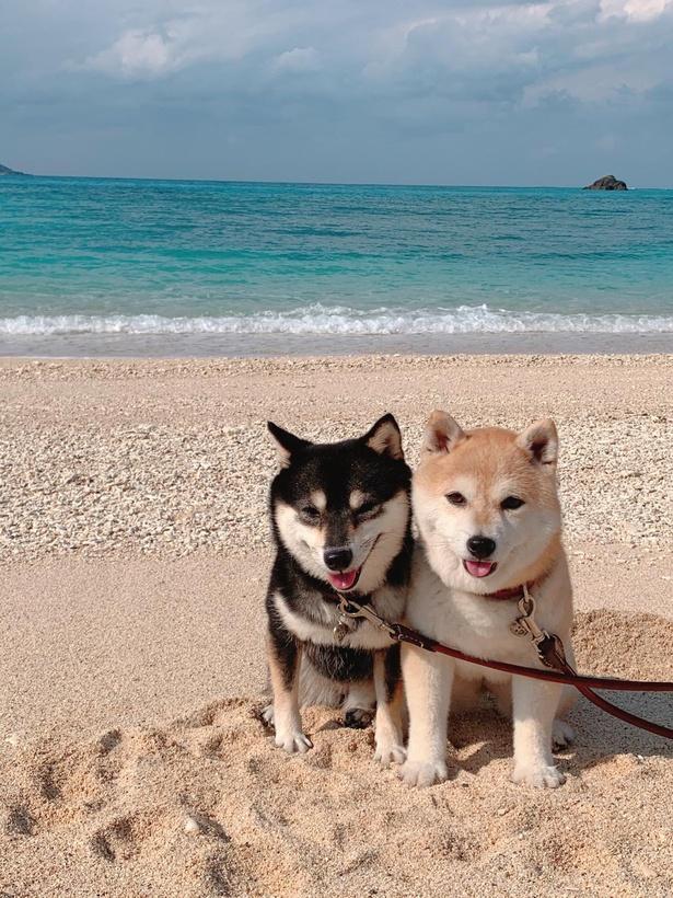 パウダー状の白砂と海のコントラストが美しい打田原ビーチ。プライベート感漂う穴場のビーチなんだとか