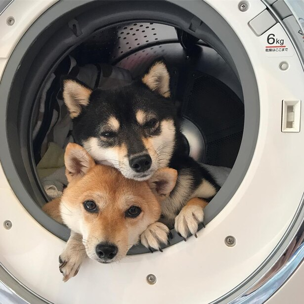 洗濯機に隠れたりと、いたずらっ子な一面も