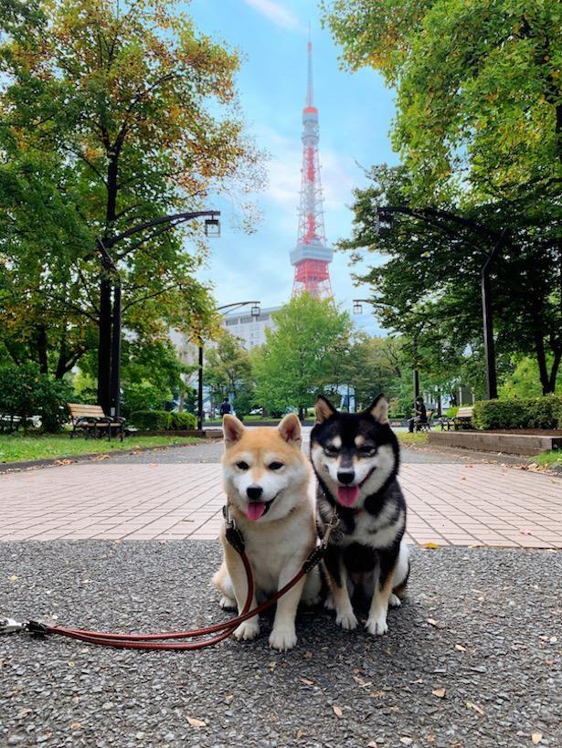 「東京タワー」を背景に、日本全国制覇の記念撮影!