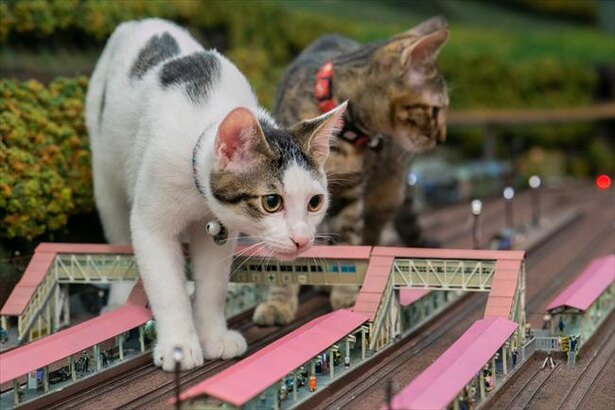 ジオラマを遊び場にする猫たちが話題に