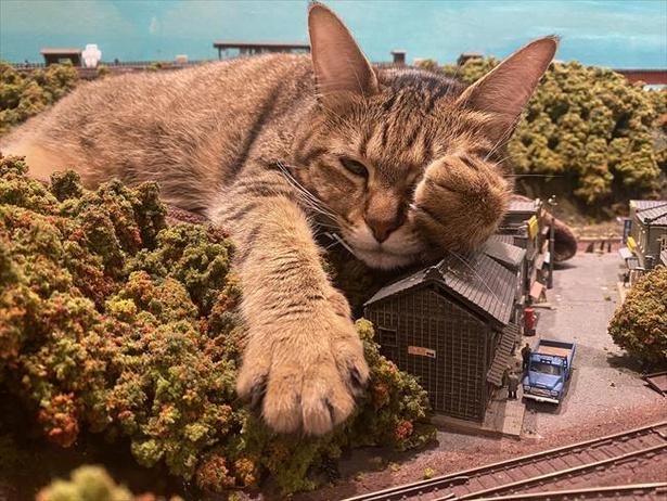 【写真】まるで怪獣映画?ジオラマを枕にすやすや眠る猫がかわいすぎる