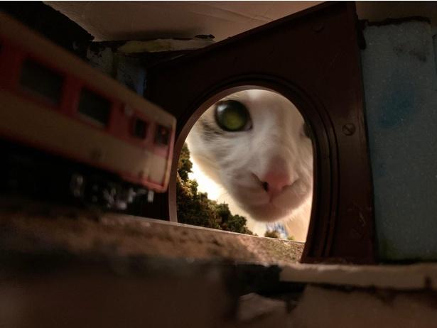 トンネルの中に興味津々