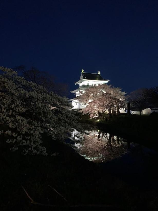 【写真】ライトアップされた松前城と夜桜もぜひ見ておきたい