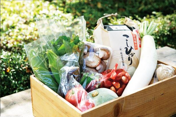 プランAは、岐阜県で採れる季節ごとの新鮮な野菜と米のセットが届く