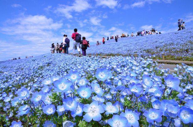 青一色の大パノラマの中を散策