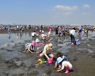 初夏の砂浜で潮干狩り、千葉県のふなばし三番瀬海浜公園で「潮干狩り」が開催