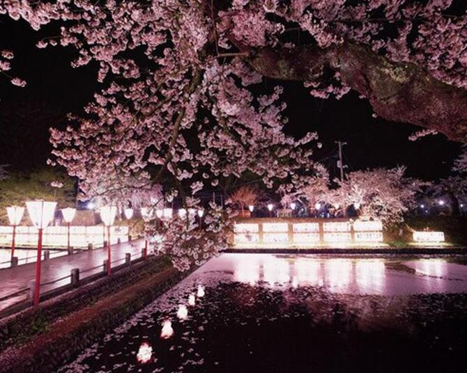 約300本の夜桜が見どころ、山形県新庄市で「新庄春まつり」が開催中