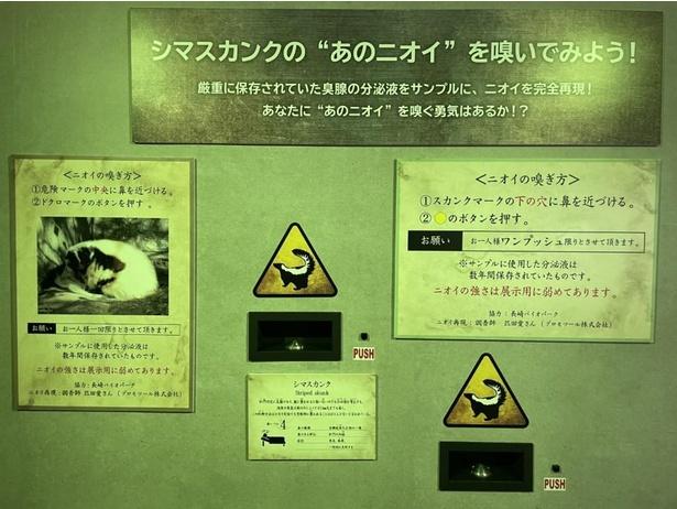 【写真】シマスカンクの刺激臭を嗅ぐことができるコーナー