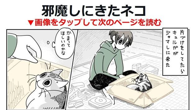 「邪魔しにきたネコ」01