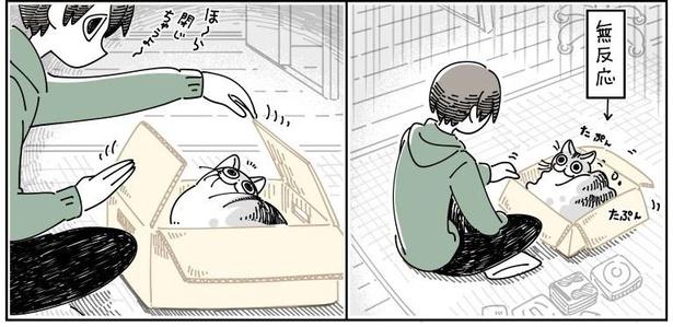 「邪魔しにきたネコ」03
