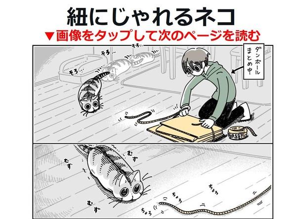 「紐にじゃれるネコ」01