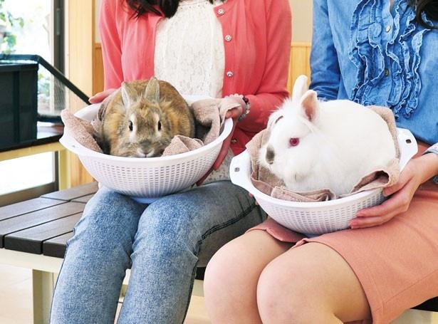 ウサギやモルモットをカゴに入れて触れ合える/淡路ファームパーク イングランドの丘