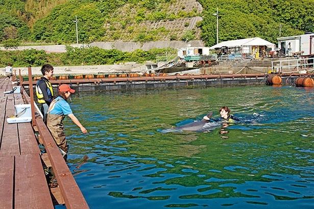 イルカと一緒に泳ぎながら、その生態や特徴などを学べる「スイムコース」/淡路じゃのひれ ドルフィンファーム