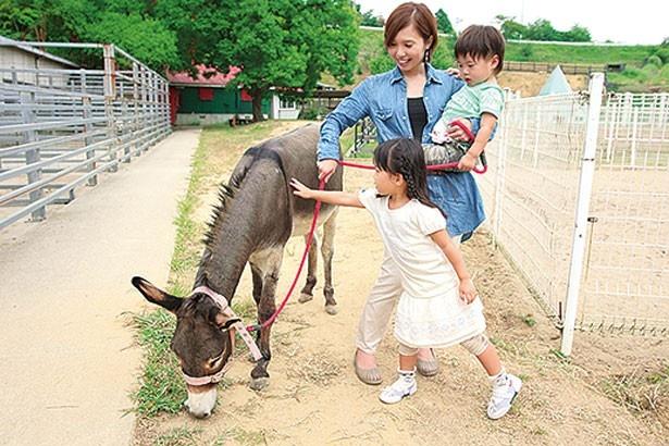 ロバのほか、ウサギやミニブタなども飼育。エサは200円で販売/淡路カントリーガーデン