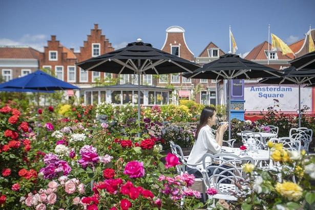 ヨーロッパの街並みに優美なバラが咲き乱れる「バラ祭り」