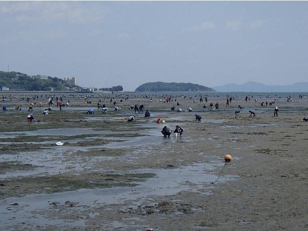 【写真】遠浅の浜辺なので子供と一緒に楽しめる