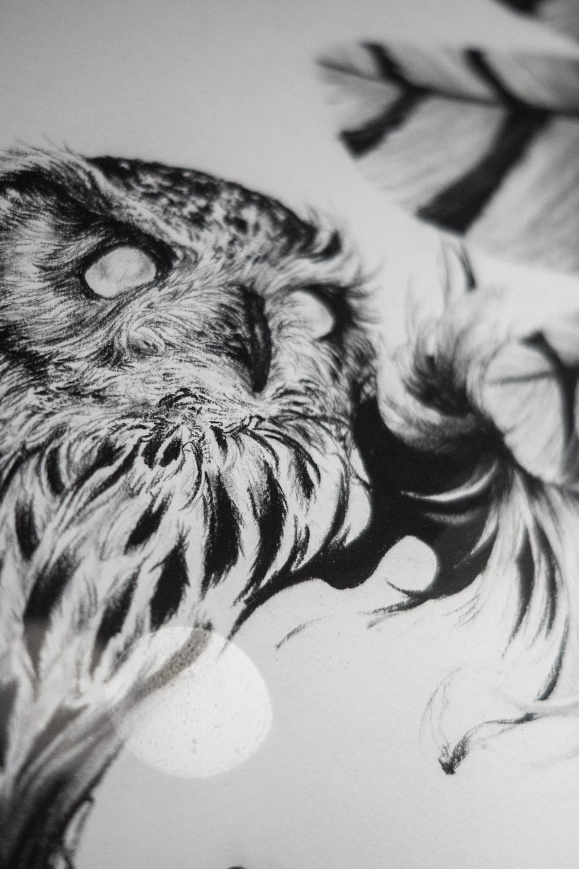 「not simple」。どこか柔らかい表情のフクロウ。毛並みの美しさに目が離せない