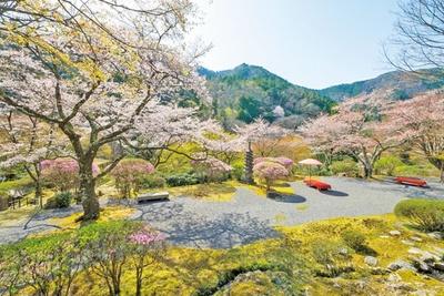 苔に映える桜など、花々が色彩豊か。野点傘と床几台が配されているので、腰かけてゆっくりと庭園美を堪能しよう/白龍園