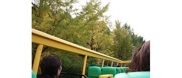 代々木界隈では、イチョウが色づいてきている