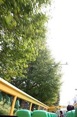 代々木公園付近は木々のトンネルのよう