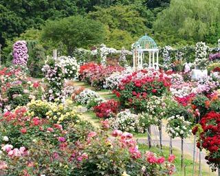 1万株のバラが咲き誇る!千葉県八千代市の京成バラ園で「It's so in Bloom!」が開催中