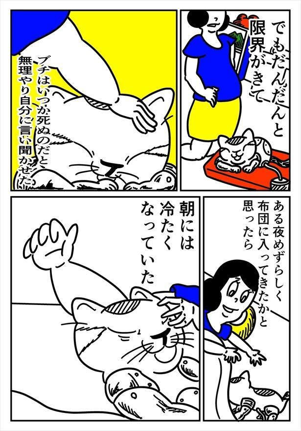 猫の人(3/12)