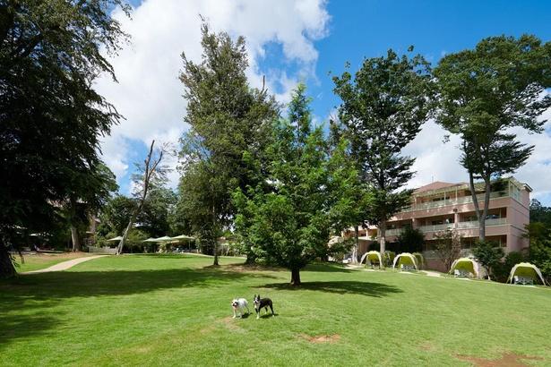 【写真】ドッグランは4カ所も!いずれも愛犬の足に優しい総天然芝
