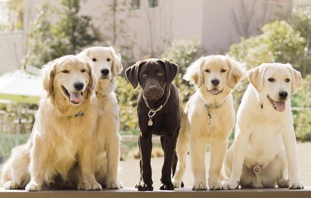 施設のPR犬として活躍しているフレンドリーな5頭のワンバサダー。園内をお散歩していたら、ぜひ声をかけてみよう