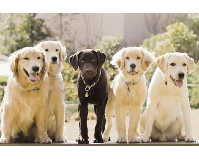 【コロナ対策情報付き】小谷流の里 ドギーズアイランドの楽しみ方!とことん遊べる人と愛犬のパラダイス