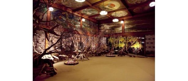 華道家として25年以上の歴史を歩んできた假屋崎省吾が生み出す究極の美の世界を堪能できる