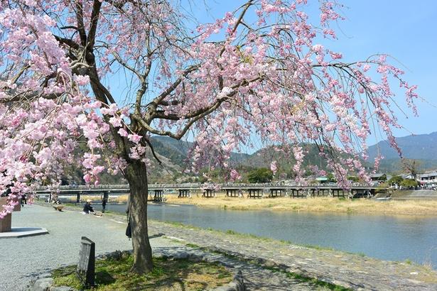 渡月橋と桂川越しに嵐山を見渡せる