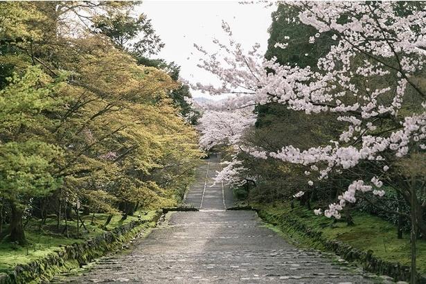 参道に華やかなピンクの花が映える