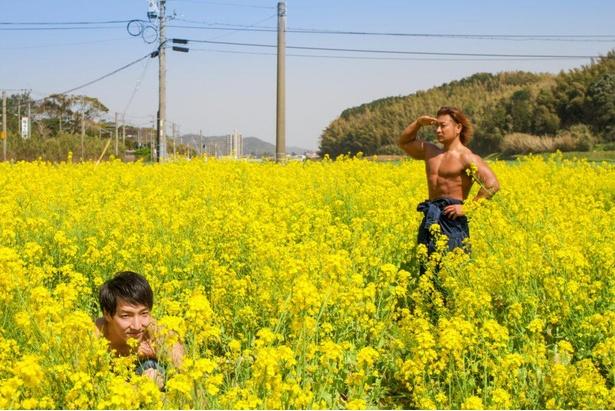【菜の花畑のマッチョ】菜の花畑でかくれんぼするマッチョ