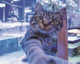 好奇心旺盛なキンちゃんは、カメラのレンズにも興味津々!