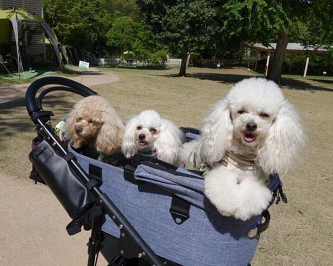 「小谷流の里 ドギーズアイランド」が愛犬にとって楽園のワケとは?わんこが喜ぶおすすめポイント3