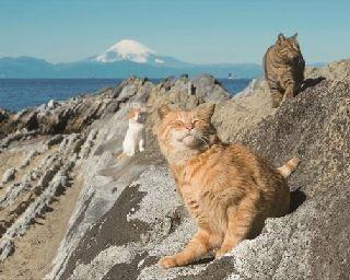 仲良し3匹についていくと、晴れた日には富士山が正面に望める、知る人ぞ知る絶 景スポットが現れた